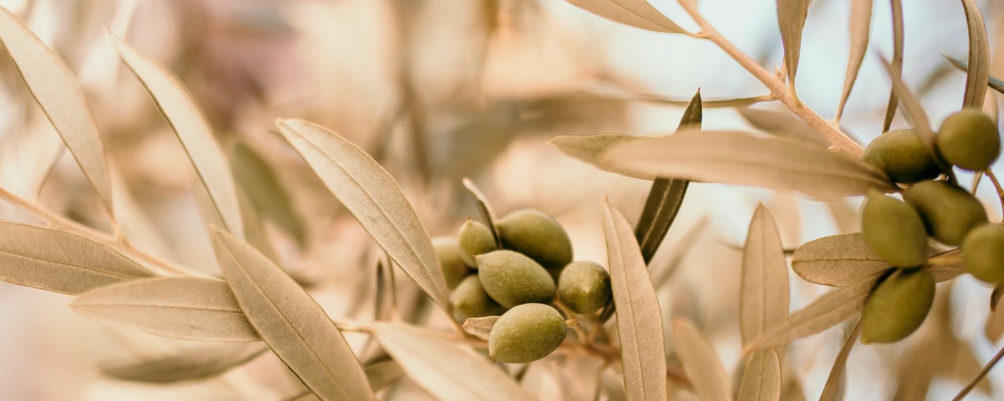 NOTOS Olivenöl von olive4u
